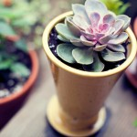 Outdoor Escape: Succulent Detail