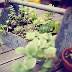 Outdoor Escape: Toolbox Planter